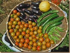 03野菜の収獲15-7-19