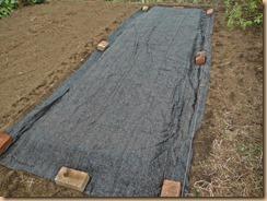 03種蒔き・覆土に寒冷紗でマルチ159-24