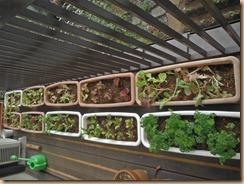 01冬野菜苗をコンテナに植付け15-10-25