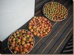 02収獲した柿の実15-10-17