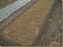 06タマネギ苗畑の雑草整理15-10-5