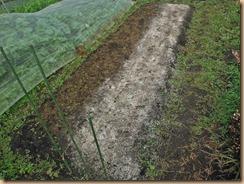 01種蒔き施肥後のホウレンソウ畑15-11-18