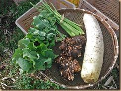 01野菜の収獲15-12-25
