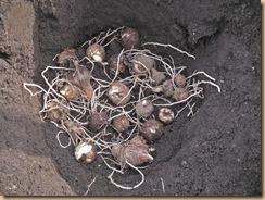02八頭種の埋設保管15-12-25