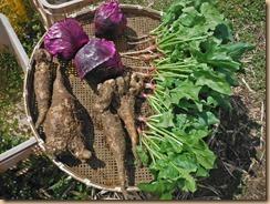 03野菜の収獲16-3-25