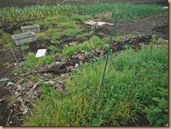 01雑草整理前のインゲン用地16-4-23