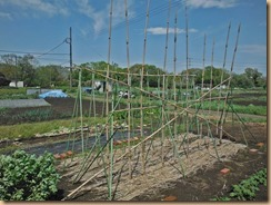 04ヤマトイモ支柱を修正16-4-18