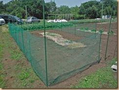 01小玉スイカ畑の整備とネット張り16-5-22