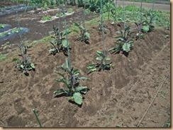 02雑草整理施肥土寄せ16-6-8