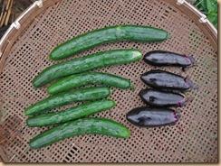 04野菜の収獲16-6-22