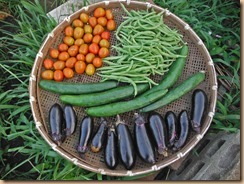 01野菜の収獲16-7-4
