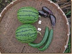 02野菜の収獲16-7-8
