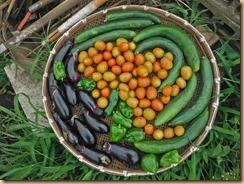05野菜の収獲16-7-12