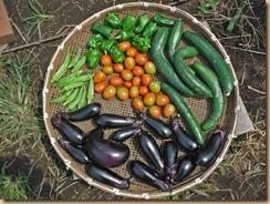 06野菜の収獲16-7-28