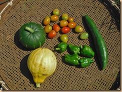02野菜の収獲16-8-10