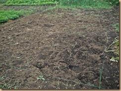 02蔓葉と雑草を整理したカボチャ畑16-8-11