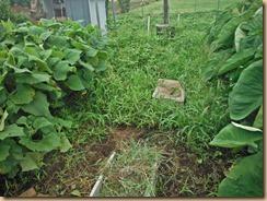 03空き地に繁茂する雑草16-8-13