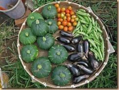 03野菜の収獲16-8-15