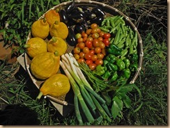 04野菜の収獲16-8-25