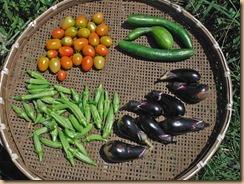 04野菜の収獲16-8-9