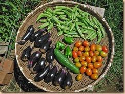 06野菜の収獲16-8-7
