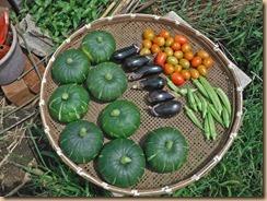 09野菜の収獲16-8-12