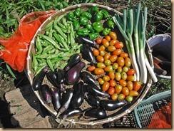 03野菜の収獲16-9-5