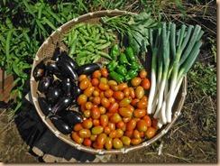 04野菜の収獲16-9-2
