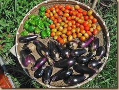 07野菜の収獲16-8-31