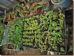 01野菜の苗16-10-21