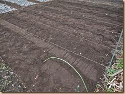 02ソラマメ種蒔き覆土鎮圧16-11-14