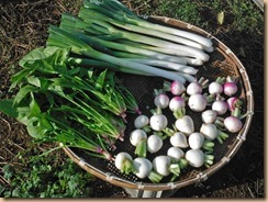 03野菜の収穫16-11-18