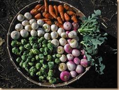 03野菜の収穫16-12-24