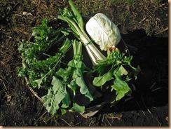 03野菜の収穫16-12-30