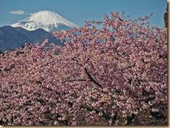 01松田河津桜と富士山17-2-13