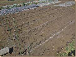 02溝掘り・種芋配置17-2-16