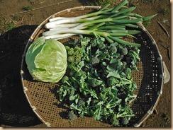 02野菜の収穫17-2-28