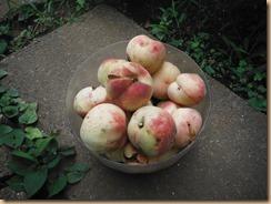 02収穫した桃17-7-23