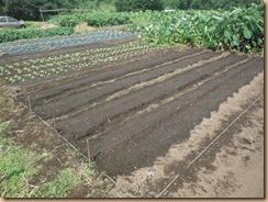 03葉物野菜の種蒔き17-9-25