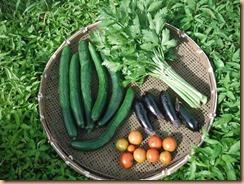 04野菜の収穫2018-6-27