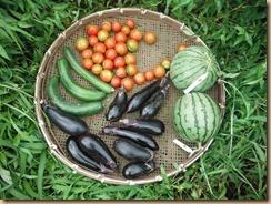 04野菜の収穫20148-7-27